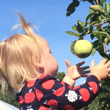 Apple picking is fun for the whole family!