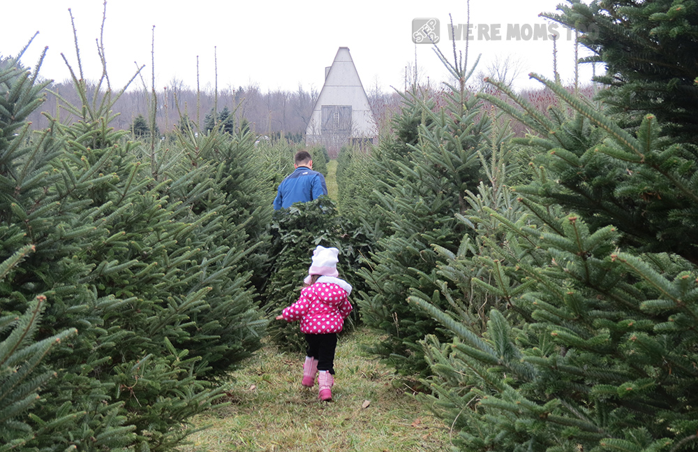 Tree-farm